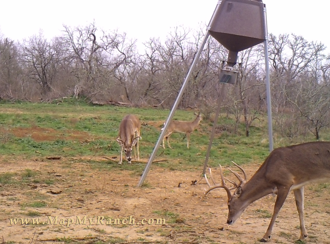 protein feeder year has making out and bucks old documented feeders months deer eight proof of in wall hangers